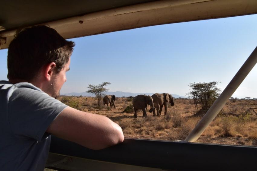 Kleine Elefantenherde in Samburu