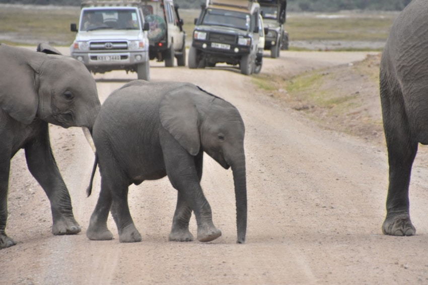 Kleiner Elefant in Amboseli Nationalpark