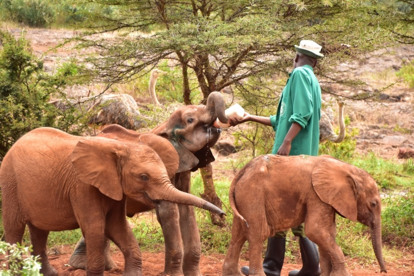 Im David Sheldrick Wildlife Trust