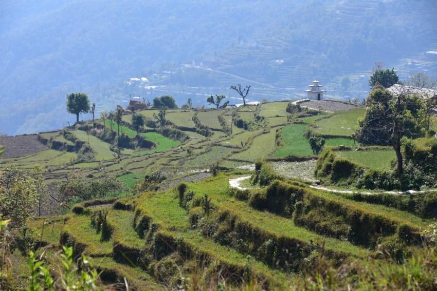 Reisfelder im Annapurna Gebiet