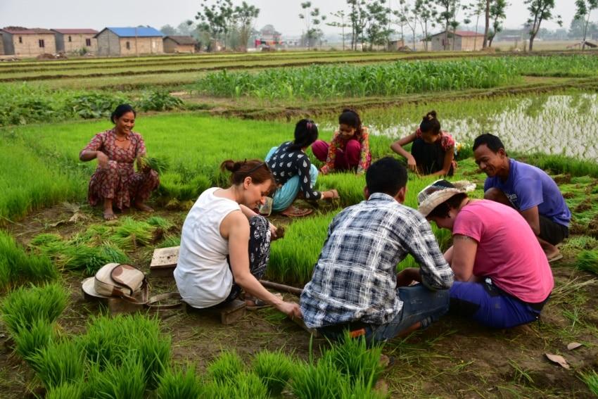 Mithelfen beim Reissähen