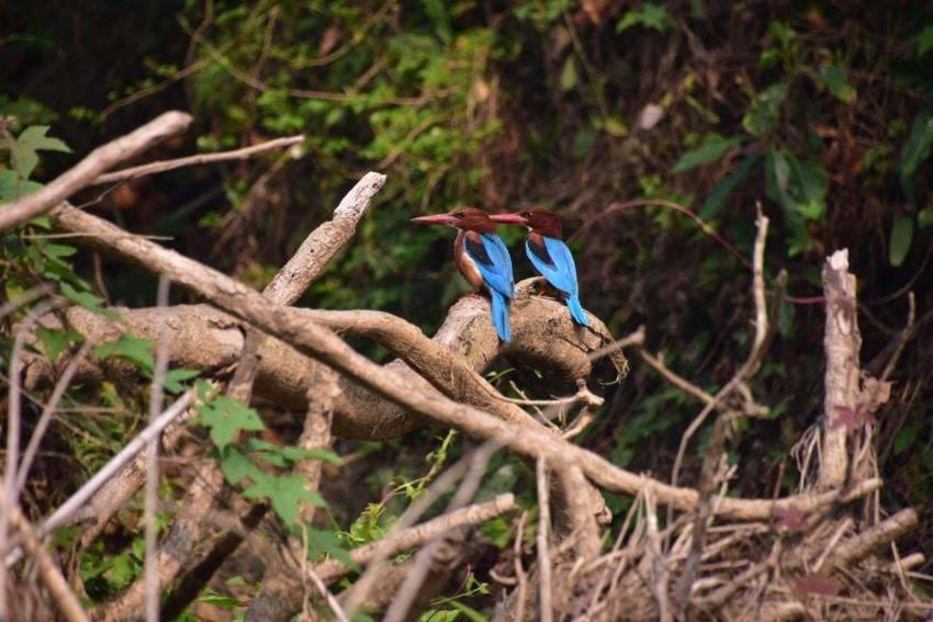 Vögel im Chitwan