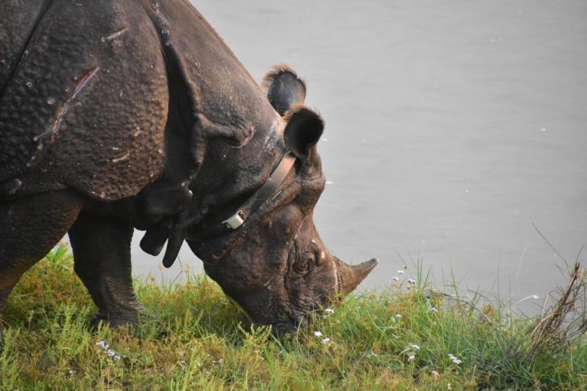Nashörner im Chitwan Nationalpark