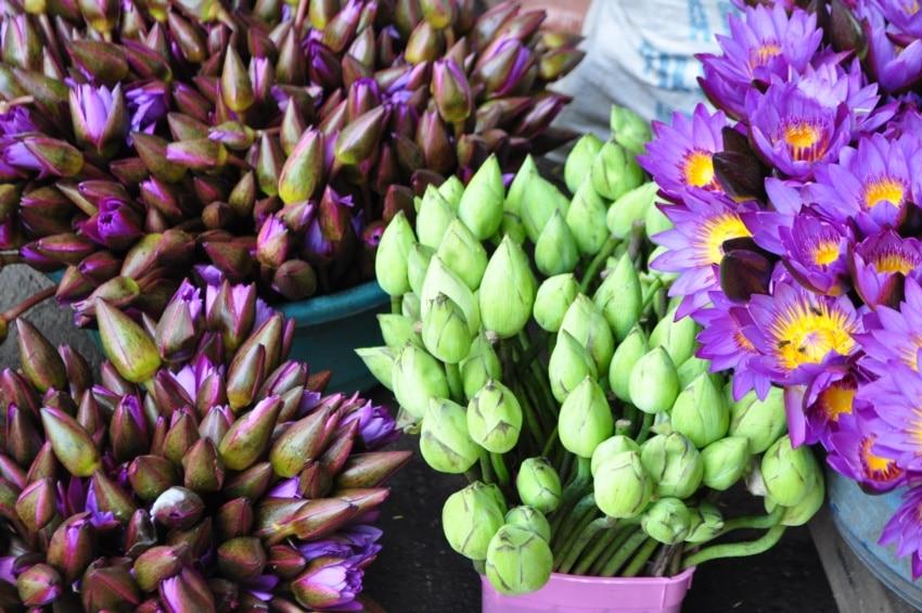 Lotusblumen als Opfergabe