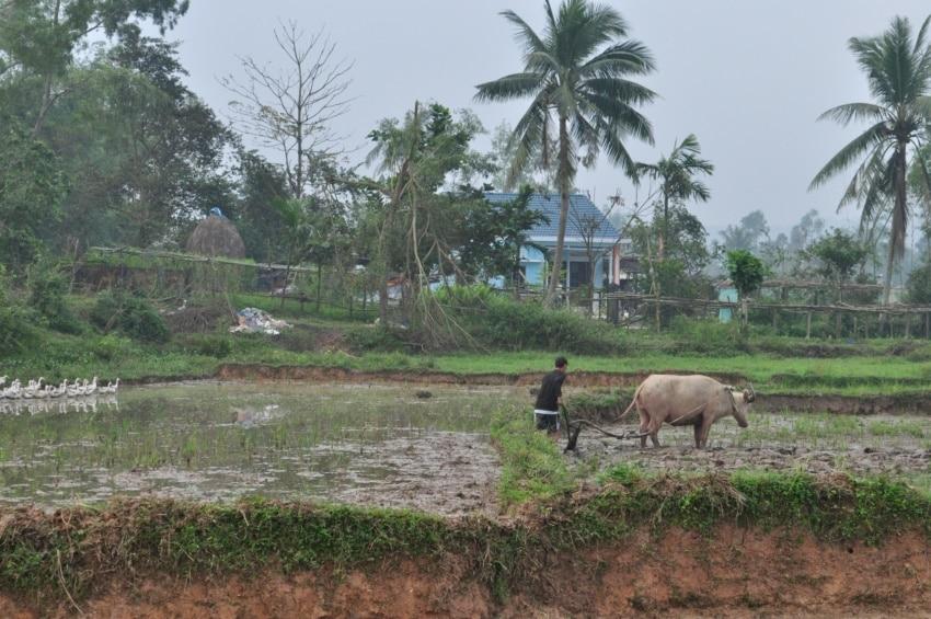 Bauern im Umland von Hoi An
